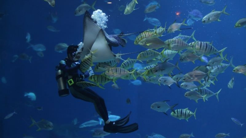 scuba-diving-in-malvan-tarkarli